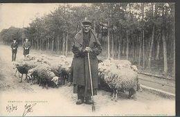 L21//  1905  KEMPSCHE SCHAAPHERDER          MOOIE SCENE!!! - Belgium