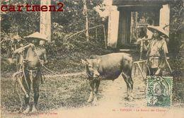 ENVIRONS D'HANOI TONKIN LE RETOUR DES CHAMPS INDOCHINE BUFFLE AGRICULTURE ASIE ASIA VIETNAM - Viêt-Nam