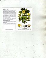 Fleurs Et Plantes Le Coton - Le Fils Du Soleil - Extrait Du Specie Dei Cotoni Par Filippo Parlatoré - Labo Paul Hartmann - Kalender