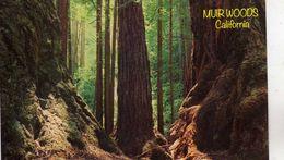 Séquoia Géant (Séquoiadendron Giganteum) - Muir Woods California - Morning In Tue Redwoods - Muir Woods Inn Mill Valley - Árboles