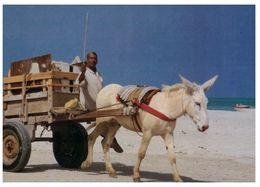 (C 6) Bahrain / Bahreïn With Donkey Cart - Bahreïn