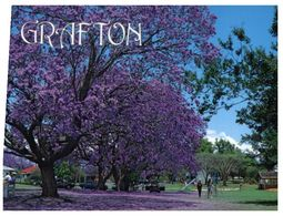 (C 9) Australia  - NSW - Grafton Jacaranda Trees - Árboles