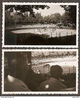 LOT DE 2 PHOTOS 1960 CORRIDA AUX ARENES DE MARSEILLE - Sports