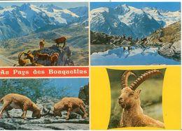 Cart341 Au Pays Des Bouquetins Stambecci Parco Nazionale Gran Paradiso Cogne Rifugio Lago Alpino Montagne - Animales