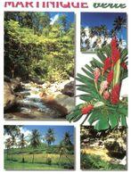(C 10) France - Martinique Verte - Arbres