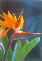 Bird Of Paradise Flower - Fleurs