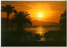 Cart305 Aurora Aurore Dawn Morgenrote Mare Palme Palm Sea - Contre La Lumière