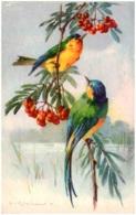 C. KLEIN - Oiseaux - Klein, Catharina