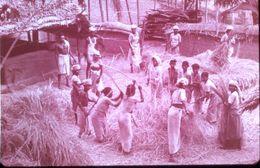 1968 DIAPOSITIVE Battage Du Riz En INDE Du SUD (KERCLA) - Diapositive