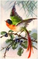 C. KLEIN - Oiseau - Klein, Catharina