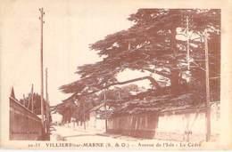 ARBRE Tree - 94 - VILLIERS Sur MARNE : Avenue De L'Isle - LE CEDRE Cedar Ceder Cedro Cedr- CPA- Bome Boom Albero árbol - Árboles