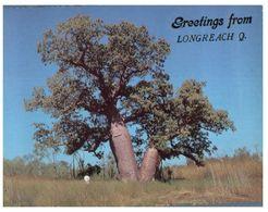 (C 11) Australia - QLD - Longreach Bottle Tree - Árboles