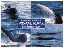 (C 11) Australia - NSW - Eden With Whales - Australia