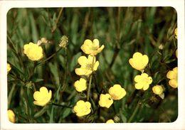 Bouton D'or    CPM Ou CPSM - Flores, Plantas & Arboles