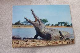 CROCODILE .....FAUNE AFRICAINE - Animaux & Faune