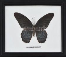Preparált The Great Mormon Pillangó üvegezett Fa Keretben, Feliratozva, 12×14,5 Cm - Autres Collections