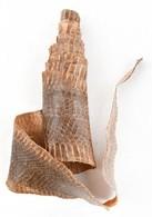Kígyóbőr Kikészítve 160 Cm - Autres Collections