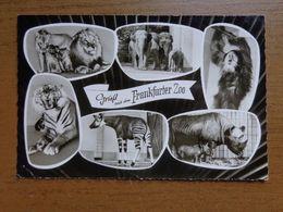 Dierenpark - Zoo / Gruss Aus Dem Frankfurter Zoo -> Unwritten - Animaux & Faune