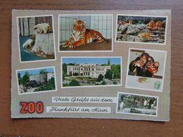 Dierenpark - Zoo / Viele Grusse Aus Dem Frankfurt Am Main Zoo -> Written - Animaux & Faune