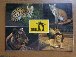 Dierenpark - Zoo / Zoo Schwerin -> Unwritten - Animaux & Faune