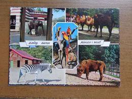 Dierenpark - Zoo / Zoologischer Garten Münster In Westfalen -> Written 1967 - Animaux & Faune