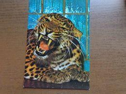 Dierenpark - Zoo / Zoo Leipzig, Chinesischer Leopard -> Unwritten - Tigres