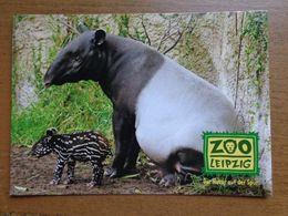 Dierenpark - Zoo / Zoo Leipzig, Risikoscheue Russeltrager -> Written - Animaux & Faune