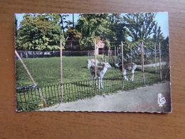 Dierenpark - Zoo / Montelimar, Le Parc -> Written - Animaux & Faune