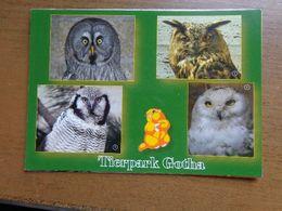 Dierenpark - Zoo / Tierpark Gotha (uilen) -> Unwritten - Oiseaux