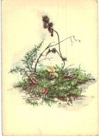 Thème -  Illustration - Doris Grill - Champignon - 882 - Illustrateurs & Photographes