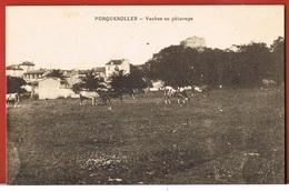 83- ILE  De PORQUEROLLES -  Vaches Au Pâturage - Cpa  Non Circulée - Porquerolles