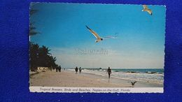 Tropical Breezes, Birds And Beaches, Naples On The Gulf Florida USA - Naples