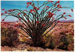 Ocotillo Blooms In Spring, Arizona Desert, US - Unused - Non Classés