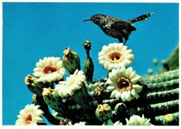 Cactus Wren & Saguaro Cactus Blossoms, Arizona Desert, US - Unused - Non Classés