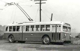 Reproduction D'une Photo Ancien  D'un Trolley Bus Alger - Reproductions