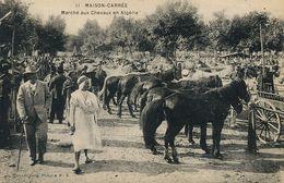 Maison Carrée Marché Aux Chevaux Horse Market Kabilye - Algérie