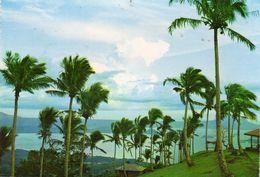 Cocotier Cocos Nucifera Coconut Palm Tagatay Philippine The Cool Breez Sweeps The Coconut Grove On The Picnic Ground JMC - Árboles