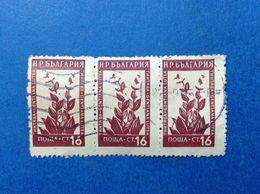 1953 BULGARIA BULGARIE FLORA PIANTE FIORI 16 CT STRISCIA DI 3 FRANCOBOLLI USATI STAMPS USED - 1945-59 République Populaire