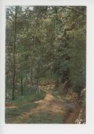 Bicentenaire Napoléon 1er 1769-1969 Croisière Impériale Sainte Hélène, Chemin Menant à La Tombe De L'empereur - Saint Helena Island