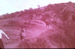 DIAPOSITIVE AFRIQUE TRADITIONNELLE ZOULOU ET XHOSAS Enclos Pour Le Bétail - Diapositive