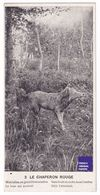 Carte Postale Publicité Chocolat Du Planteur Chaperon Rouge Loup Red Riding Hood Wolf A37-30 - Fairy Tales, Popular Stories & Legends