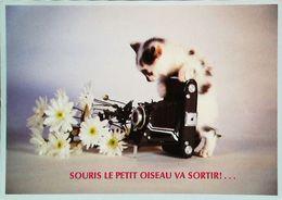 Carte Postale   Appareil Photo Chat   Souris Le Petit Oiseau Va Sortir - Appareils Photo