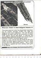 Advertising - Solignum Wood Preservative - Pubblicità 1951 - Non Classés