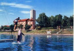 Cesenatico - Aquarium Dei Delfini - Formato Grande Viaggiata – E 16 - Italie