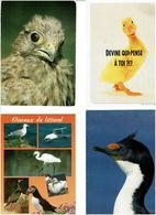 OISEAUX /  Lot De 90 Cartes Postales Modernes écrites - Cartes Postales