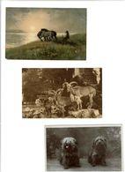 DIVERS FAUNE / Lot De 90 CPSM écrites - Cartes Postales