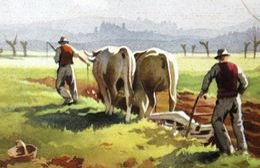 Laboureur Champs Agriculture Boeufs Labour Illustrateur SILVIO BONELLI Illustrator Plowman In A Field Agriculture Oxen - Equipos