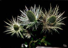 Chardon Bleu Ou Panicaut Des Alpes   CPM Ou CPSM - Flores, Plantas & Arboles