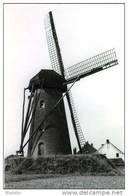 KESSENICH Bij Kinrooi (Limburg) Molen/moulin - Historische Opname Van De Stenen Bergmolen 'De Korenbloem' Omstreeks 1950 - Kinrooi
