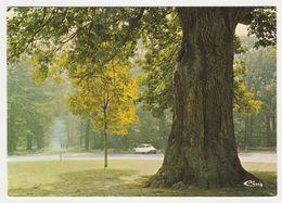 91 Forêt De Sénart Vers Brunoy Bel Arbre Le Chêne Dantin Citroën DS Seule En 1984 - Brunoy